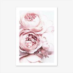 Peony Print Flower Wall Art Nature Prints Floral Print