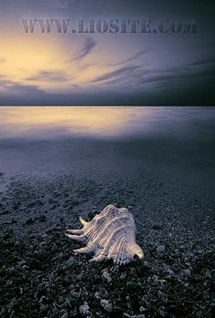 Un giorno, uomo o donna, viandante, dopo, quando non vivrò, cercate qui, cercatemi tra pietra e oceano, alla luce burrascosa della schiuma. Qui cercate, cercatemi, perché qui tornerò senza dire nulla, senza voce, senza bocca, puro, qui tornerò a essere il movimento dell'acqua, del suo... [..]