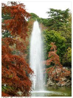 El surtidor-fuente en el lago del Palacio de Cristal del Retiro. Water fountain and wáter cypresses in the lake of Cristal palace El Retiro Gardens Madrid