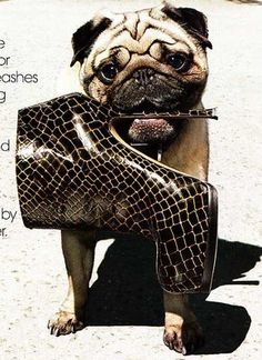 Came across this photo taken by Raymond Meier for the October 2008 issue of Vogue magazine. Who cares about the boots? Look at that face! Yes, I am a pug person.