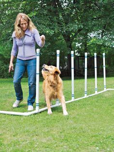 Build this easy-to-assemble agility course for your dog, and watch him get happier, healthier—and smarter