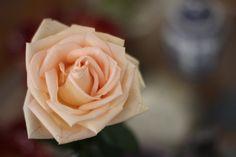 Flor de Mãe por Luiza Santaella