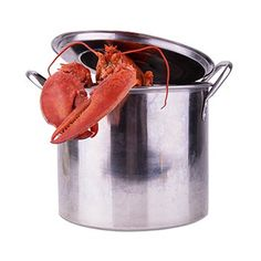 Learn how to cook the perfect lobster! We will give you all the instructions you need to cook a lobster like a professional chef. Boiled Lobster Recipes, Steamed Lobster, Lobster Boil, Live Lobster, Shrimp And Lobster, Grilled Lobster, Lobster Bake Party, Cooking Time, Cooking Recipes