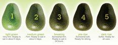 Avocado ripeness chart