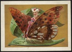 Girl riding butterfly sitting on a leaf [front] | Flickr - Photo Sharing!