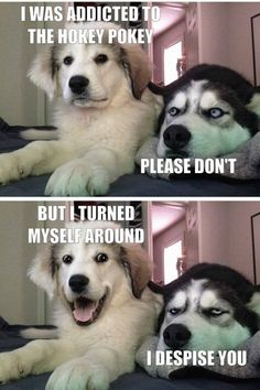 Funny Cute Funny Dogs That Will Make Your Day Funny Dogs That Will Make Your Day Pics) - Page 4 of 4 - Wackyy Dogs are the best pets ever and they know how to entertain their owner. Enjoy funny dogs that will make your day. Funny Dog Jokes, Cute Funny Dogs, Crazy Funny Memes, Cute Funny Animals, Funny Dog Pics, Funny Humor, Cute Dog Memes, Funny Puppies, Puppies Tips