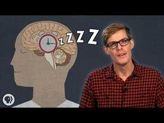 Why Do We Have To Sleep? - YouTube