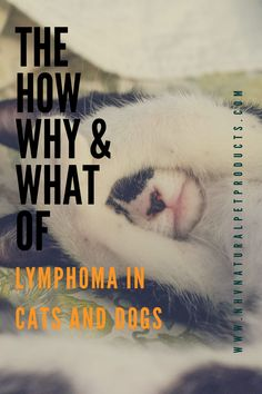 Symptoms of Lymphoma in pets can vary depending on the type of lymphoma, location in the body and the stage of the tumor. Read on to find symptoms and treatment options for Lymphoma in cats and dogs.