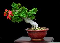 Bonsai by ihsan efeoglu on 500px