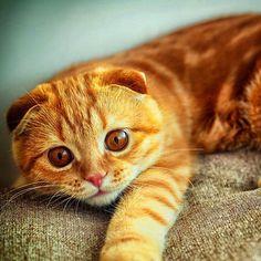 #cats #cat #gato #orangecat #catorange