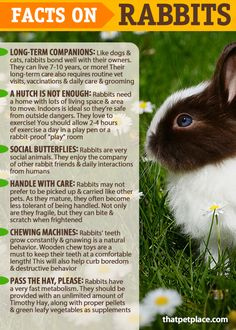 Facts on the care & keeping of Rabbits Are Rabbits the right pet for you?