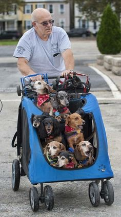 This man has rescued and adopted dogs who have lost the use of their back legs, and every day he strollers them to the dog park, where he reattaches their 'wheels', so they can play. Faith in humanity restored ; ) xxxooo