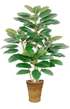 Silk Fiddle Leaf Floor Plant 48 X High X70 Leaves Trees Plants Or Make It
