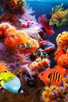 Tropische vissen in een zoutwater aquarium met prachtig koraal!