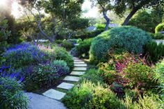 San Ysidro Ranch, Santa Barbara, California: One of many intimate paths wends past compact Mexican sage, Chiapas sage and Pride of Madeira on the way from the guest cottages to the communal spaces.