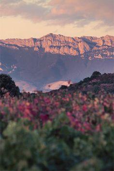 Briones La Rioja - Spain