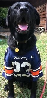 52 Best SEC Pets Dressed for Gameday! images in 2016