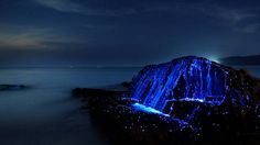 Shrimp galaxy: Sea fireflies glow after being placed on a rock in Okayama Prefecture.