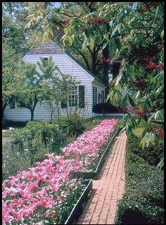 Colonial Williamsburg - Prentis Garden, tulips and brick path