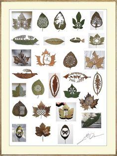 Amazing, enthralling detail. 2008-2010 Cut Leaf Art by  Lorenzo M. Durán o9f South Africa.