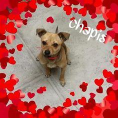 Chapis