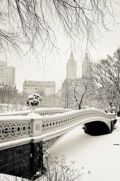 Beautiful snow in Central Park.