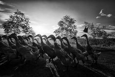 2013 National Geographic Photo Contest | Lomba Foto National Geographic 2013 - Yahoo News Indonesia