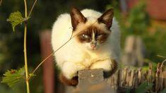 'Grumpycat' by linnastu Fox, Animals, Animales, Animaux, Animal, Animais, Foxes