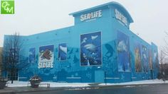 Review and pics! Sea Life Aquarium at Great Lakes Crossing in Auburn Hills MI... http://oaklandcountymoms.com/sea-life-great-lakes-crossing-aquarium-pics-42806/