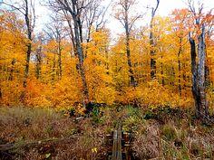 Porcupine Mountain fall color photo essay- Entering an enchanted ...