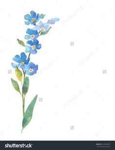 Forget-me-not Stock Photos, Images, & Pictures | Shutterstock