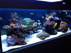 Aquascaping, Show your Skills... - Page 30 - Reef Central Online Community 120…