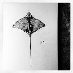 Stingray sketch - 3rd of April 2016, Daily drawing