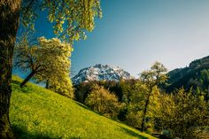 The Mountain - View at the Traunstein in Upper Austria in spring. Mountain View, Austria, Golf Courses, Spring