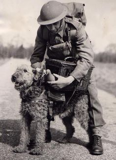 Who knew they were such exceptional war dogs? Used mostly by the British I think. Military Working Dogs, Military Dogs, Airedale Terrier, Welsh Terrier, Terriers, Animals And Pets, Cute Animals, Photos With Dog, War Dogs