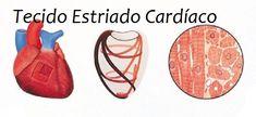 Tecido muscular cardíaco - Encontrado no coração, esse tipo de tecido possui movimento involuntários sendo formado por células longas e cilíndricas além de possuir estrias transversais.