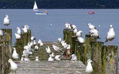 Balaton #lake #balaton #hungary #naturephotography