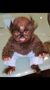 CarnEvil freak baby by Halloween Forum member rachelesmith ~ this lil wolf baby is adorable! Freak Show Halloween, Halloween Circus, Halloween Forum, Halloween Doll, Halloween Haunted Houses, Halloween Festival, Outdoor Halloween, Halloween Projects, Halloween House