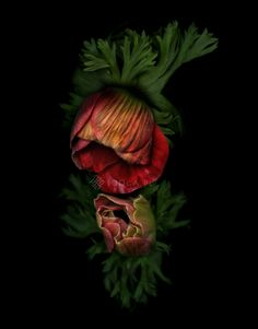 Plenty of Plants - Joanna Stoga Photohraphy, Anemone, flowers, plants, botanical Inspiration, floral, flowers, picture,