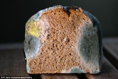 A fungus found growing on mouldy bread, called Neurospora crassa, is able to transform the metal manganese into the materials needed for batteries, paving the way for more sustainable production | Daily Mail UK