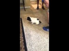Adorable Cavachon puppy cousins meet for the first time! Charley and Callie, it… Adorable Cavachon puppy cousins meet for the first time! Charley and Callie, it… – Cavachon Puppies From Foxglove Farm – Cavachon Puppies, Cute Puppies, Cousins, First Time, Cute Pictures, Meet, Cute Photos, Cute Baby Dogs