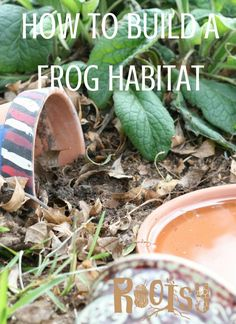How to build frog habitats Frogs and toads are wonderful for your garden. They eat lots of insects such as mosquitoes, slugs and beetles. So, build a few frog habitats in the garden for natural pest control. Frog House, Toad House, Unique Garden, Natural Garden, Permaculture, Frog Habitat, Organic Insecticide, Mosquitos, Organic Gardening Tips
