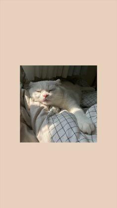 Wallpaper Gatos, Iphone Wallpaper Cat, Funny Cat Wallpaper, Bad Girl Wallpaper, Disney Phone Wallpaper, Sad Wallpaper, Cute Cartoon Wallpapers, Animal Wallpaper, Cute Cat Memes