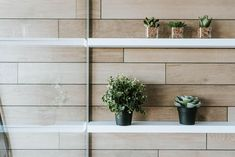 PLANTES GORDON  #lusine #plante #gordon #accessoire