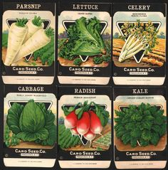 Vintage 6 Dif Old VEGETABLE SEED PACKETS Pack 1920s NOS New York CARD SEED CO #1