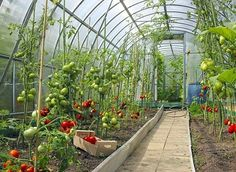 5 Considerations for Year-Round Greenhouse Growing -MOTHER EARTH NEWS