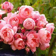 nothing like pink peonies !!!!!