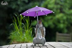 Photographer Gives Squirrel A Tiny Umbrella To Protect Itself From Rain | Bored Panda