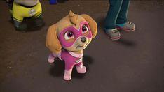 Los Paw Patrol, Paw Patrol Pups, Animated Movies For Kids, Cockapoo, Kid Movies, Asian Boys, Apollo, Animation, Gallery