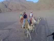 Sharm el Sheikh Reisen offers Day Excursions, Tours & Trips in Sharm El Sheikh Egypt and the surrounding area including Sharm Sightseeing trips & Special tours to Cairo and Luxor. http://english.sharm-el-sheikh-reisen.com/bsort.show.php?id_bsort=23